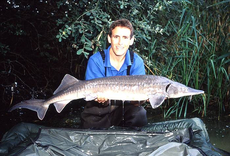 A bonus sturgeon from a trip carp fishing abroad, immediately after I hooked the fish it leaped straight out of the water.